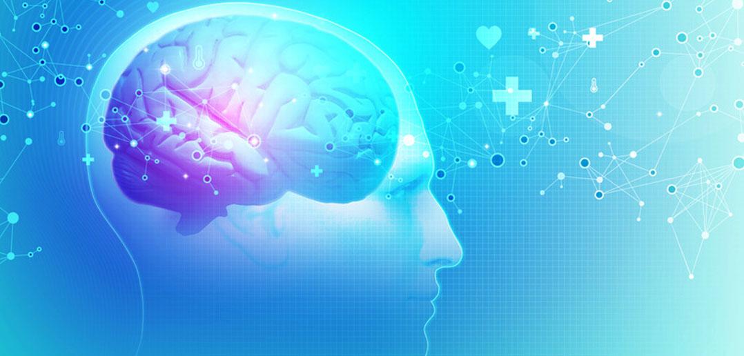 cognitive function development
